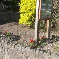 Flower Bed Macroom Road Picnic Area.jpg