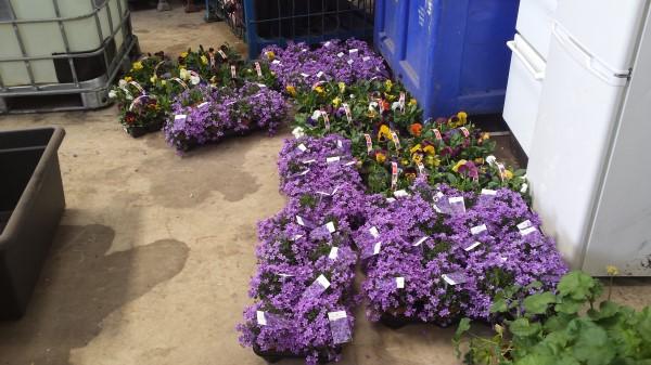 Flowers supplied by Sponsors Supervalu Millstreet.jpg
