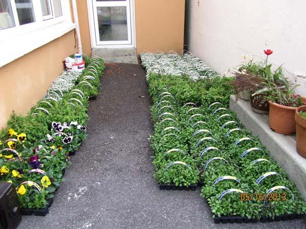 04-Ready-for-planting.jpg
