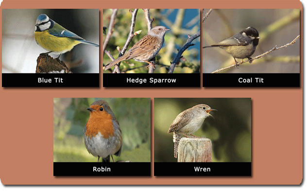 14-Local-Species-of-small-birds.jpg