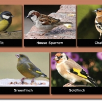 14-Local-Species-of-Bird.jpg