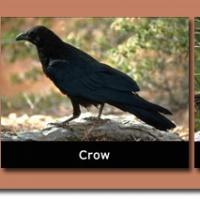 14-Local-Species-of-birds.jpg