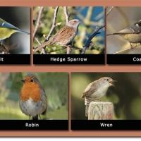 14-Local-Species-of-small-birds.jpg