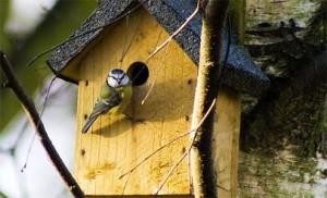 nest-box1 (494 x 300)